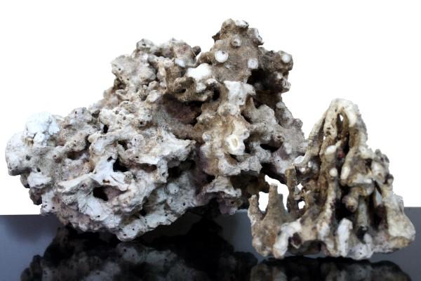 Korallenriffgestein